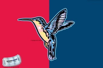 Vector Art Hummingbird